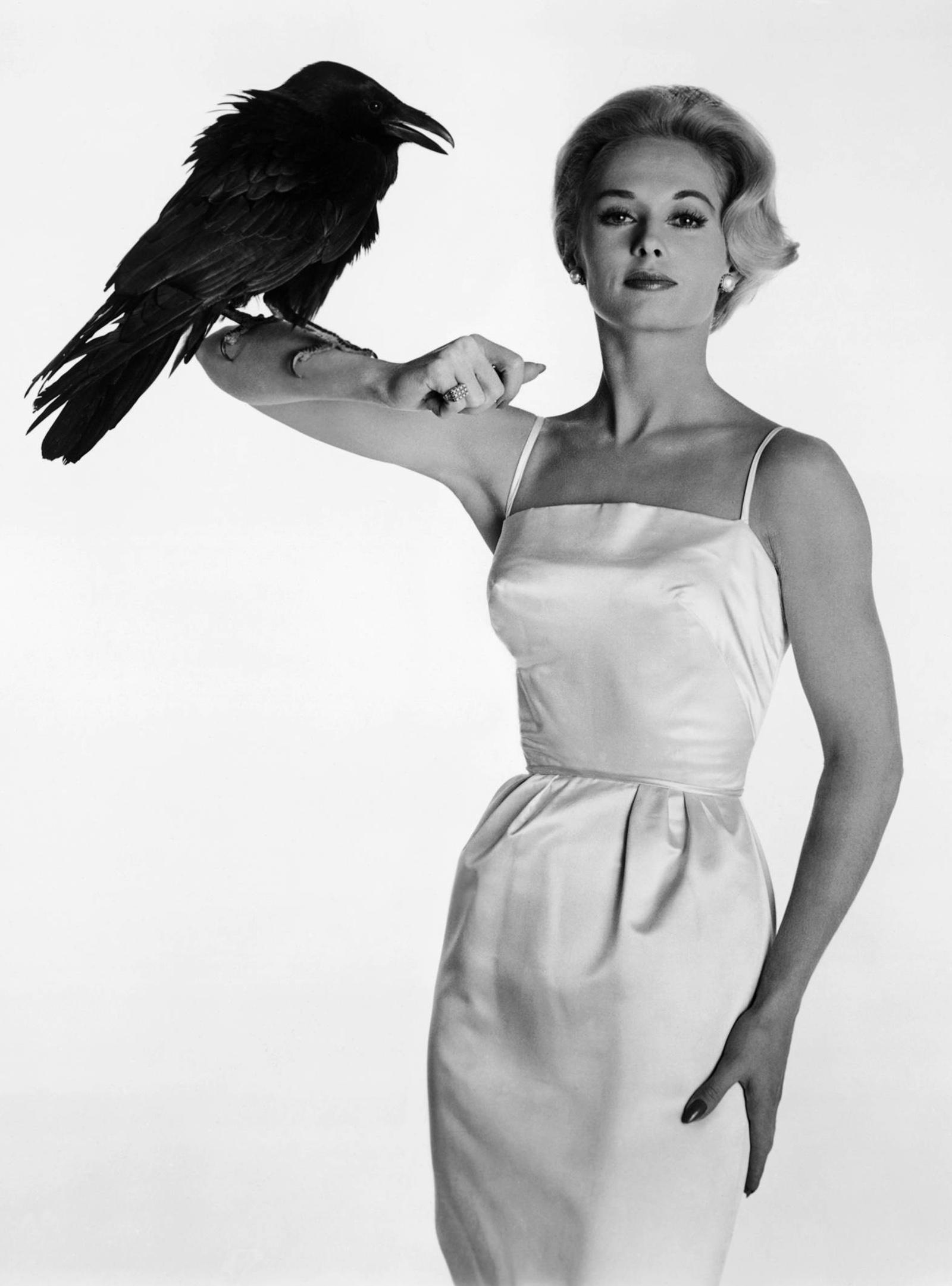 tippihedrenbirds_large